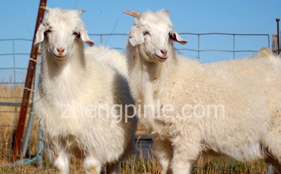 羊绒衫和羊毛衫的区别及真假辨别方法