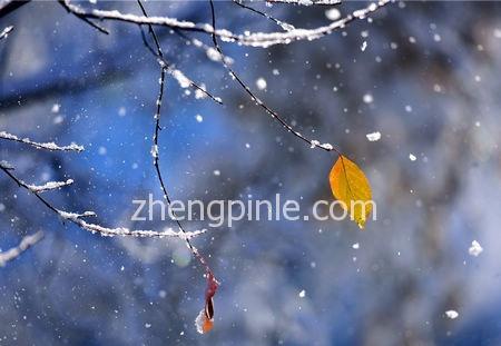 二零一五初雪临