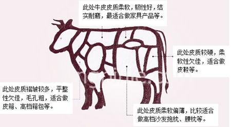 不同部位牛皮的特性区别